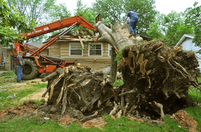 Tree Removal MIlton Ga