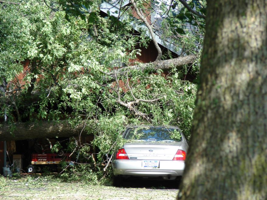 emergency tree service alpharetta ga