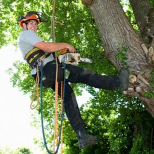 tree removal service alpharetta ga