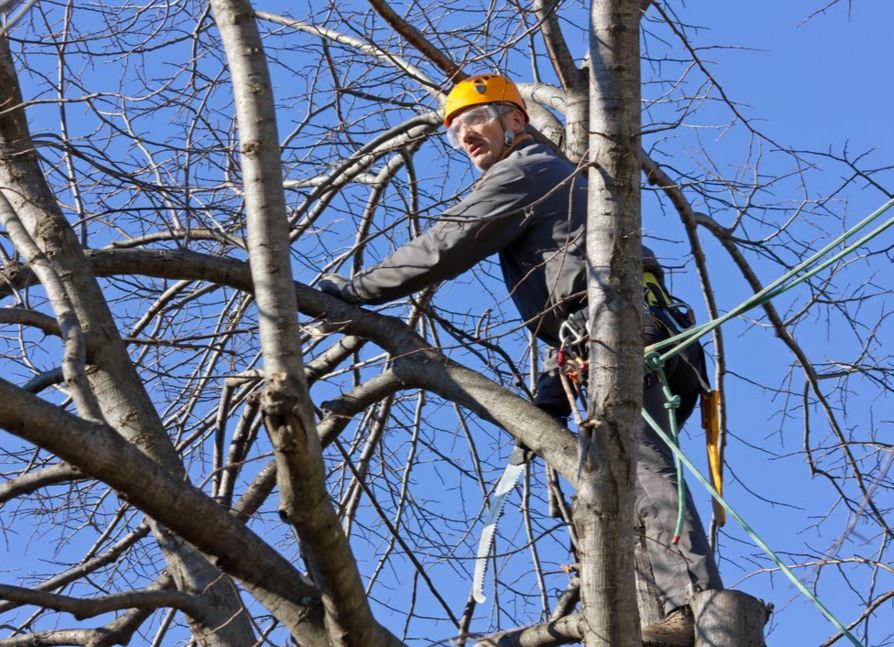 tree trimmers near me alpharetta ga