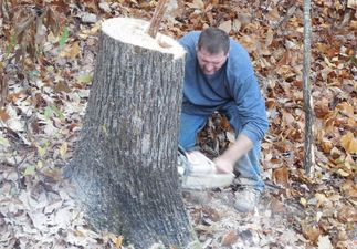 tree services near me alpharetta ga