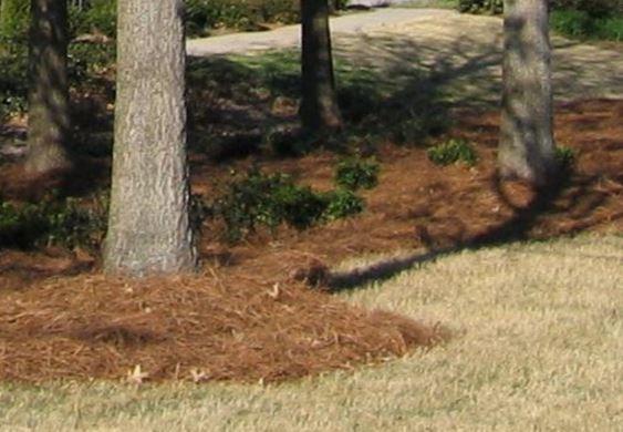tree mulching alpharetta ga